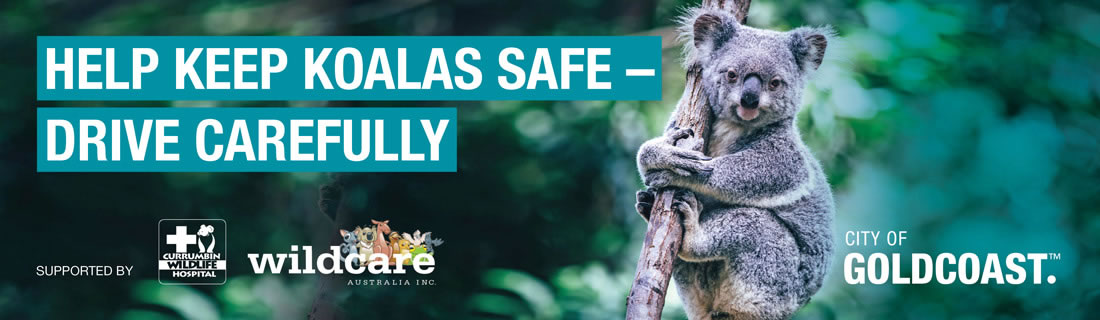 Help Keep Koalas Safe - Drive Carefully | City of Gold Coast.
